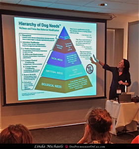 Dr. Katrina Ward, DVM, presenting The Hierarchy of Dog Needs to the Australian Veterinary Association's Tasmanian branch.