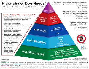 Hierarchy of Dog Needs Linda Michaels Del Mar Dog Trainer dog psychologist dog training pyramid behavior