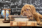 Puppy of Dogue de Bordeaux (French mastiff) lying on pile of books