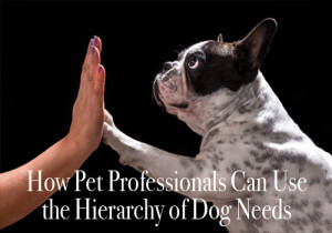 Pet professionals hierarchy of dog needs linda michaels ma del mar dog training san diego