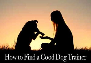How to find a good dog trainer linda michaels del mar dog training san diego
