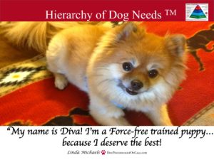 Linda Michaels Del Mar Dog Training Hierarchy of Dog Needs
