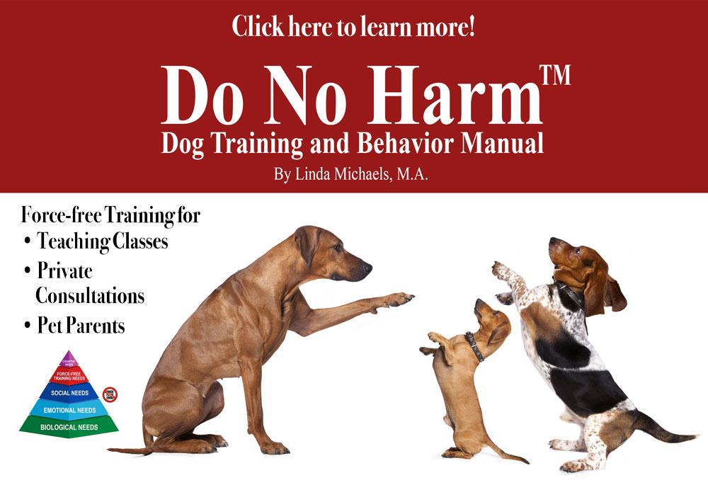 Therapy Dog Training Carlsbad