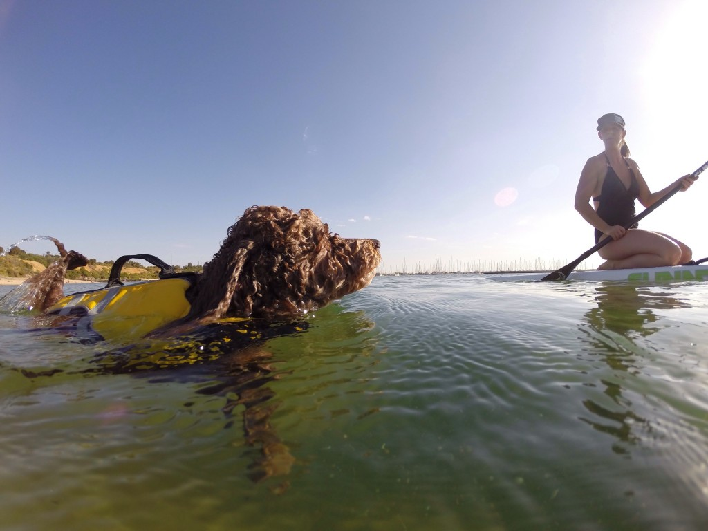 woman on stand up paddle board with her swimming dog